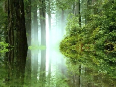 A forests reflection