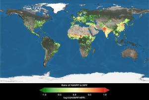 Our plant consumption