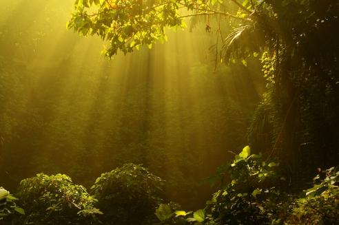 An Awakened Life: Trials and Tribulations* Spirit-of-nature1