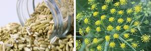 Fennel seeds from foeniculum vulgare