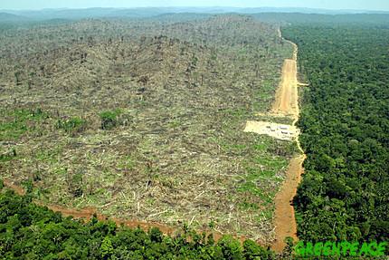 deforestation changing the landscape in Brazil