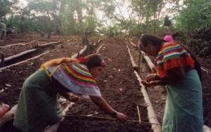 86ba2-chiapaswomenfarm
